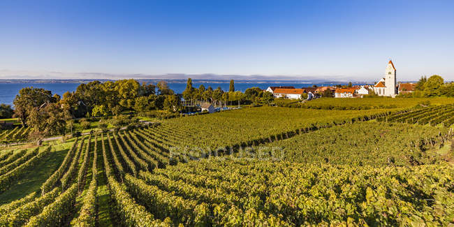 Germany, Baden-Wuerttemberg, Hagnau, Lake Constance, Church and vineyard — Stock Photo