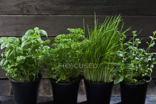 Four flowerpots with various herbs — Stock Photo