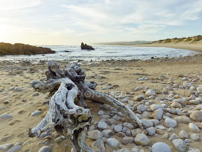 África do Sul, Western Cape, Knysna, Buffalo Bay, Deadwood na praia — Fotografia de Stock