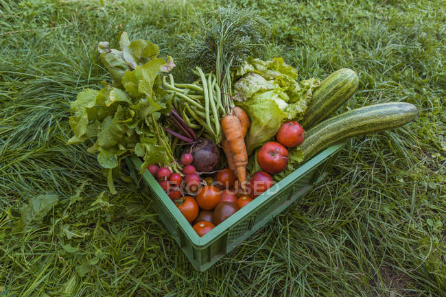 Harvested mixed vegetables and apples in a box — стоковое фото