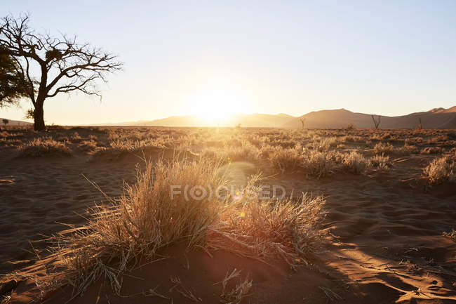 Africa, Namibia, Namib-Naukluft National Park, Namib desert, grasses, droughtiness, sunset — стоковое фото