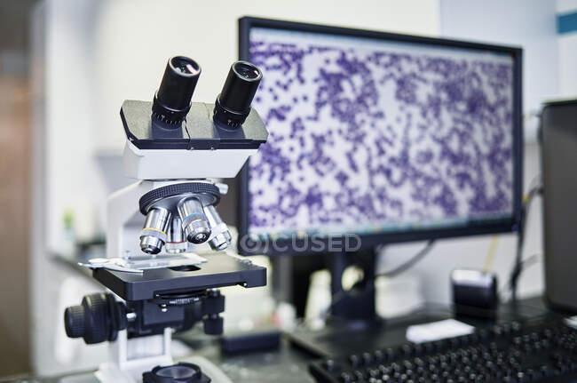 Pratique vétérinaire, microscope et écran — Photo de stock