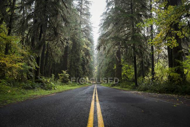 USA, Washington State, Hoh Rain Forest, Road — Stock Photo