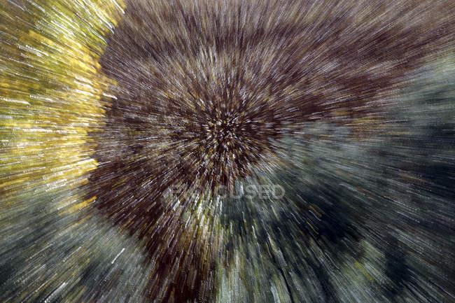 Hermoso cultivo de mimbre borroso en Canamares, España en otoño - foto de stock