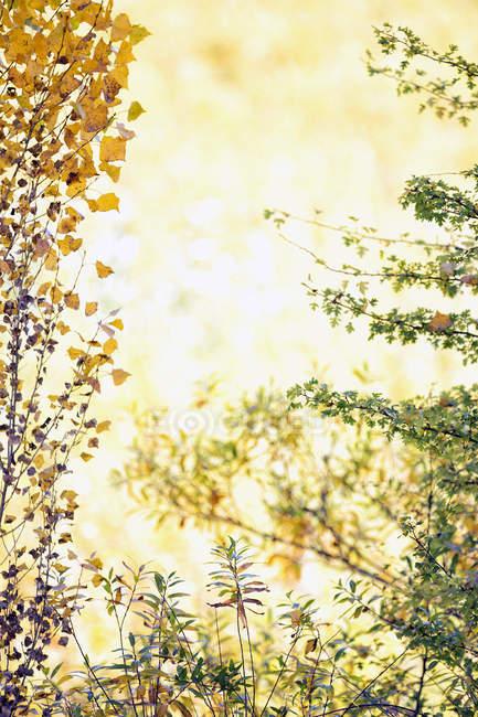 Belle culture d'osier à Canamares, Espagne en automne — Photo de stock