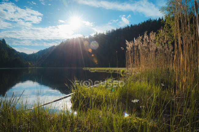 Austria, Styria, Woerschachwald at sunny day — Stock Photo
