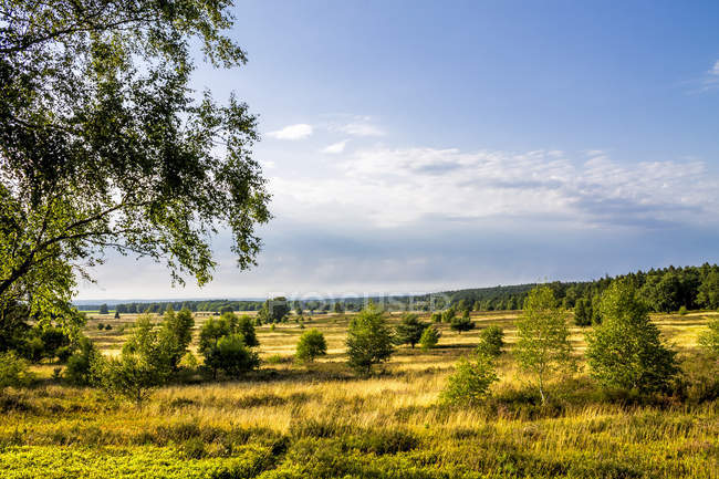 Germany, Lower Saxony, Lueneburg Heath at daytime — Stock Photo