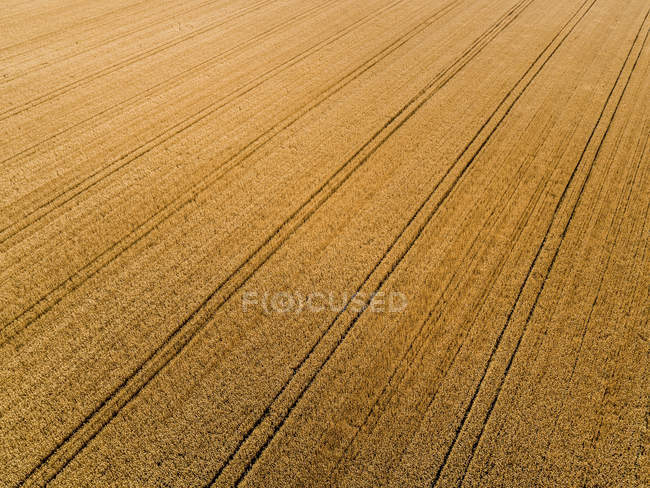 Serbia, Vojvodina, agricultural fields, aerial view at summer season — Stock Photo