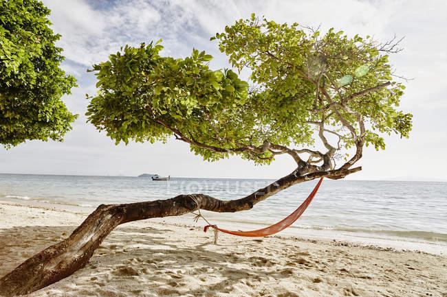 Thailand, Phi Phi Islands, Ko Phi Phi, hammock in a tree on the beach — Stock Photo