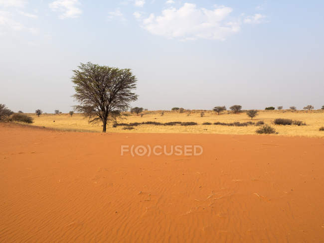 Belle vue sur Kalahari, Namibie, Afrique — Photo de stock