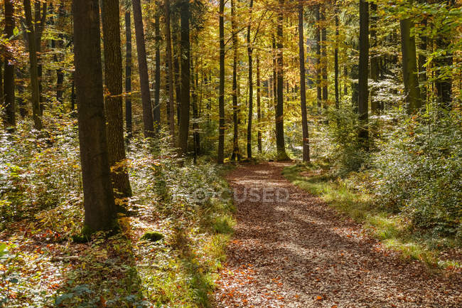 Germany, Bavaria, Lower Bavaria, near Kelheim, Weltenburger Enge, forest path in autumn — Stock Photo