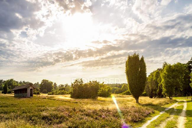 Alemanha, Baixa Saxónia, Lueneburg Heath durante o dia — Fotografia de Stock