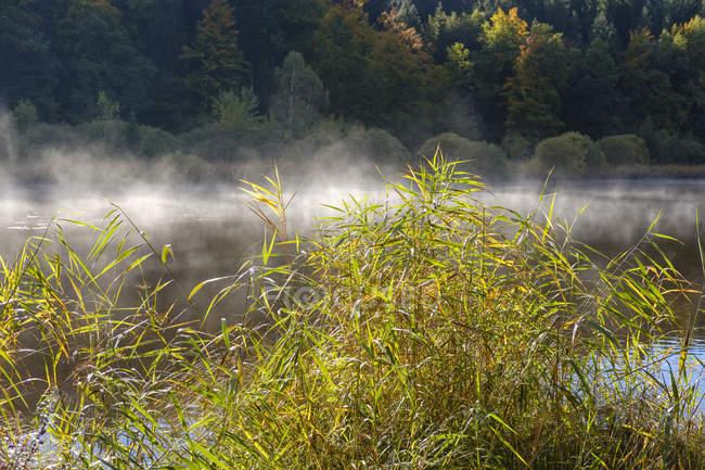 Германия, Бавария, Верхняя Бавария, Дейнингер Вейхер, тмычий и утренний туман — стоковое фото