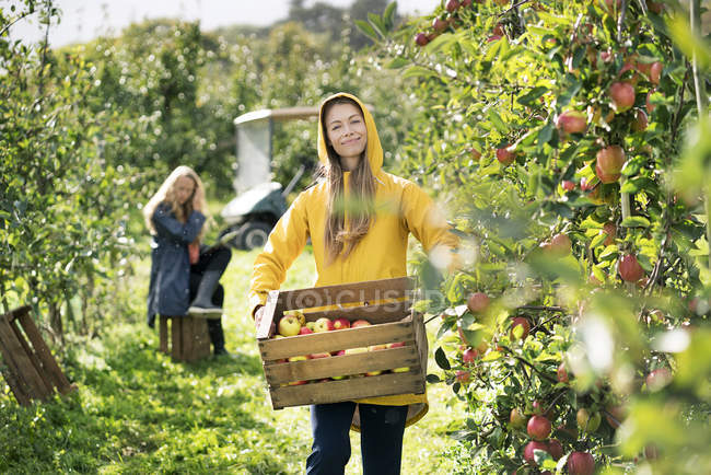 Two women harvesting apples in orchard — Stock Photo