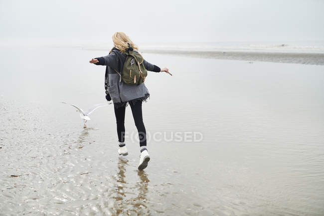 Pays-Bas, vue de dos de jeune femme avec sac à dos marchant derrière une mouette sur la plage — Photo de stock