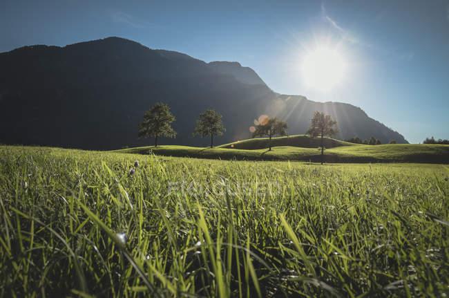Austria, Bad Ischl, Katrinberg and meadow against the sun — Stock Photo