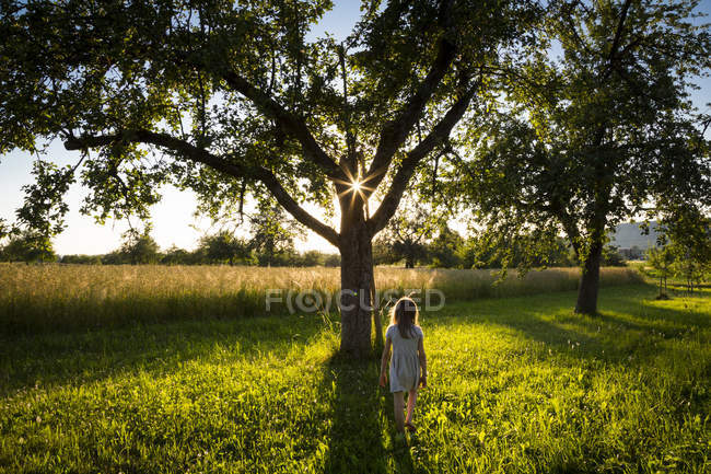 Young girl walking on meadow to tree at summer evening — Stock Photo