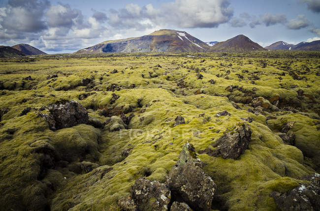Iceland, South of Iceland, moss-grown volcanic rock — Stock Photo