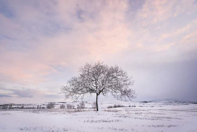 España, puesta de sol en el paisaje invernal con un solo árbol desnudo - foto de stock