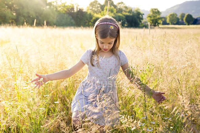 Молода дівчина ходить по полю влітку ввечері. — стокове фото