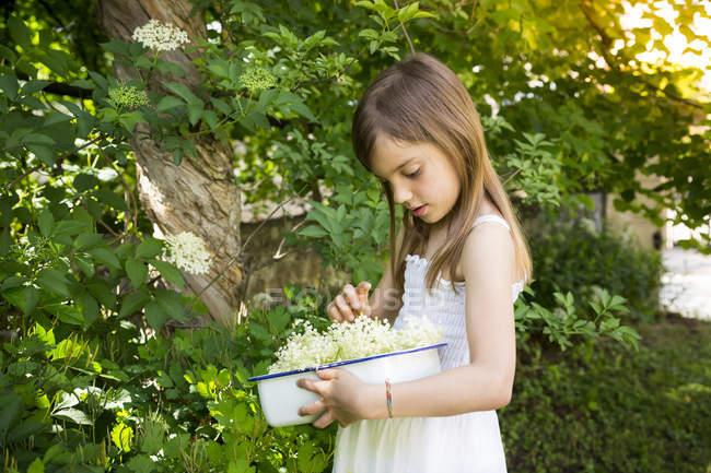 Маленька дівчинка збирає квітки — стокове фото