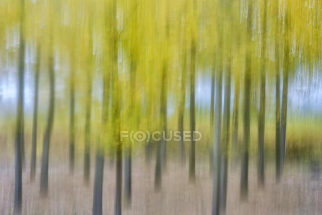 Bellissimi alberi colorati sfocati a Canamares, Spagna — Foto stock