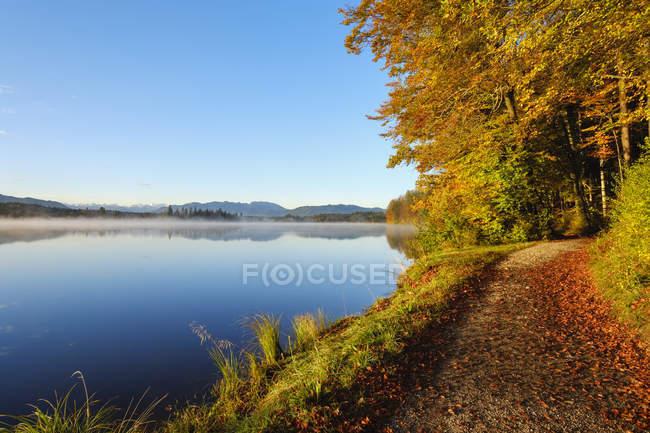 Alemania, Baviera, Alta Baviera, Sachsenkam, Toelzer Land, Lago Kirchsee por la mañana, otoño - foto de stock
