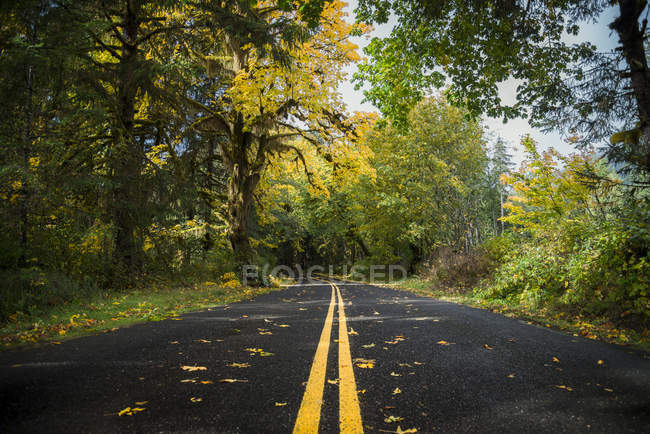 США, Washington State, Hoh Rain Forest, Road in Осенью — стоковое фото