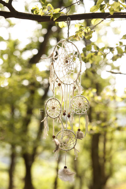 Close up of Dream catcher in tree — Stock Photo