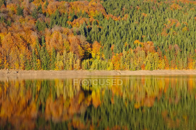 Germany, Bavaria, Lower Bavaria, Bavarian Forest, Nature reserve Obere Ilz, Ilz river in autumn — стокове фото