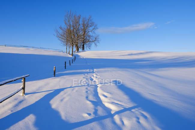 Германия, Бавария, Верхняя Бавария, Альпийские предгорья, Перетшофенер Хёхе, заснеженный путь зимой — стоковое фото
