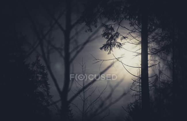 Arbres et pleine lune — Photo de stock