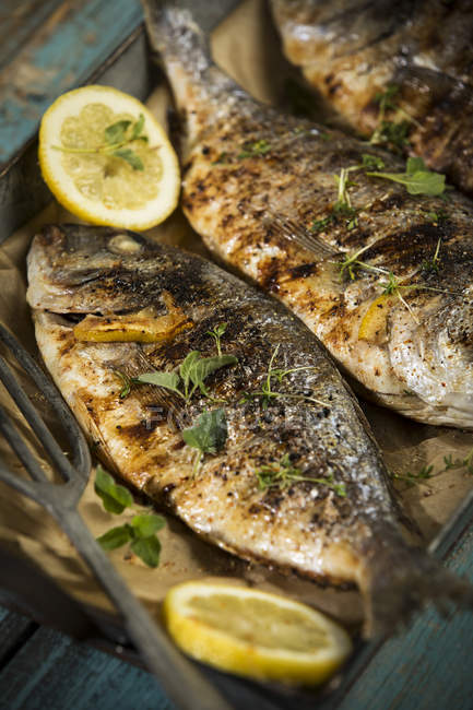 Close up of Grilled sea breams — Stock Photo