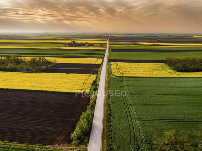 Serbia. Campos agrícolas con campo de colza amarillo, vista aérea en verano - foto de stock