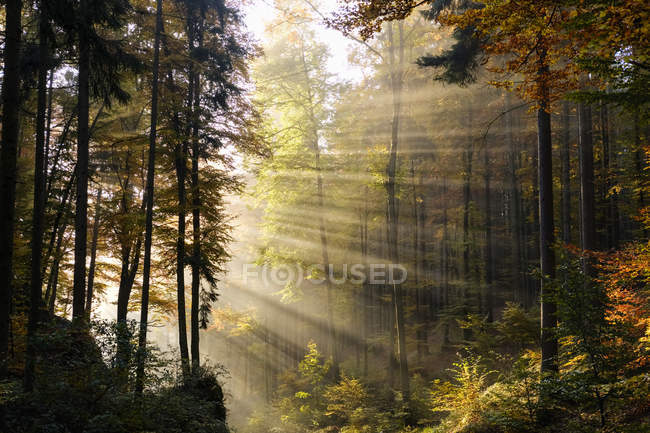 Germany, Bavaria, Lower Bavaria, Altmuehl Valley, forest, autumn, morning fog — Stock Photo