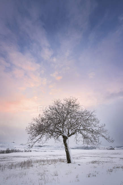 Spain, sunset in winter landscape with single bare tree — Stock Photo
