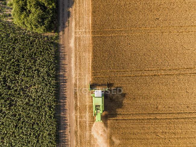 Serbia, Vojvodina. Combinar cosechadora en un campo de trigo, vista aérea - foto de stock
