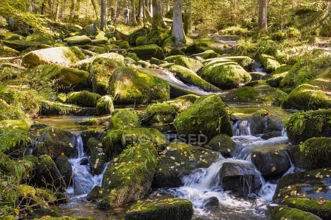 Германия, Бавария, ущелье Зауссбах близ Вальдкирхена — стоковое фото