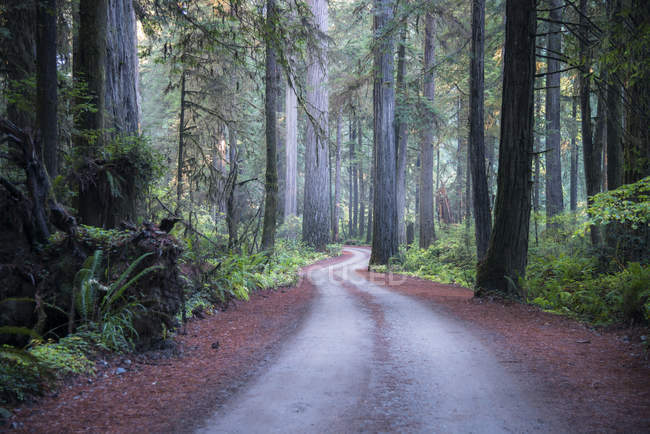 USA, California, Crescent City, Jedediah Smith Redwood State Park, road — Stock Photo
