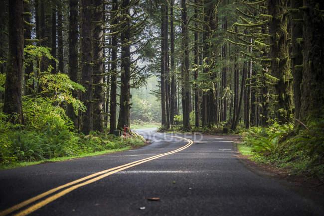 USA, Washington State, Hoh Rain Forest, Road — Fotografia de Stock