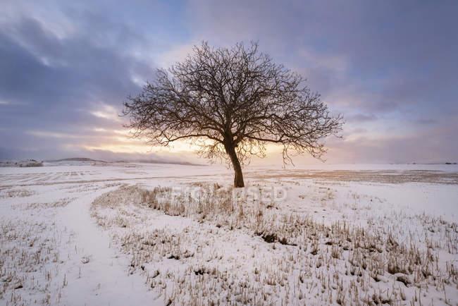 Espagne, coucher de soleil dans un paysage hivernal avec un seul arbre nu — Photo de stock