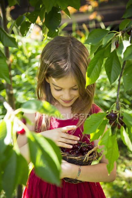 Портрет маленькой девочки с корзиной, полной вишни — стоковое фото
