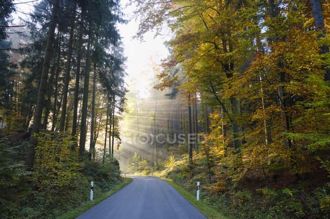 Allemagne, Bavière, Basse-Bavière, vallée de l'Altmuehl, route vide près de Riedenburg en automne, brouillard matinal — Photo de stock