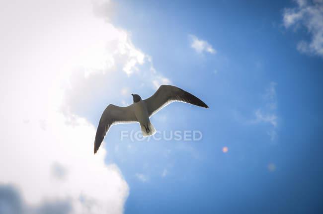 Над блакитним небом летить чайка. — стокове фото