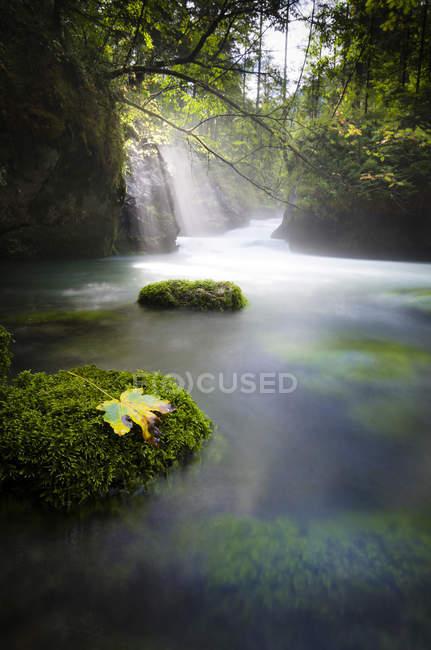 Австрия, Халльберг, природный ручей, водопад, солнечный свет — стоковое фото