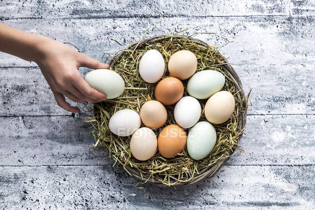 Different eggs, white, brown, light brown and green eggs — Stock Photo
