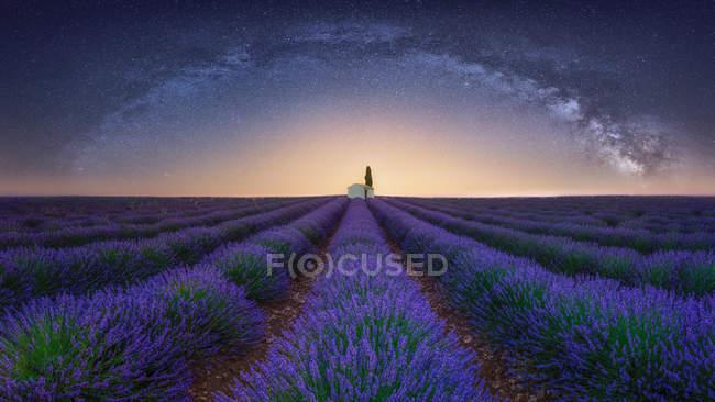 França, Alpes-de-Haute-Provence, Valensole, campo de lavanda sob forma leitosa — Fotografia de Stock