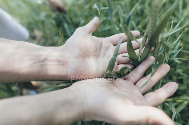 Mani dell'uomo in campo — Foto stock