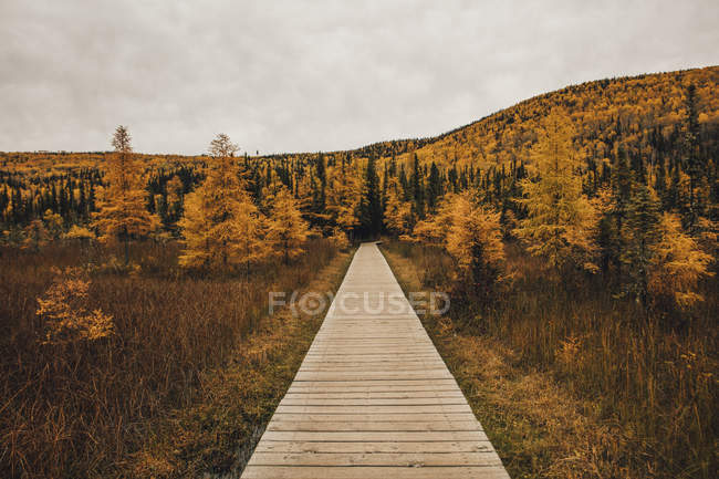 Canada, British Columbia, Liard River Hot Springs Provincial Park, wooden boardwalk in autumn — Stock Photo
