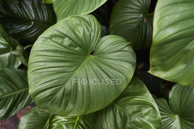 Green leaves of a plant — Stock Photo